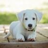 donate phone to help animals